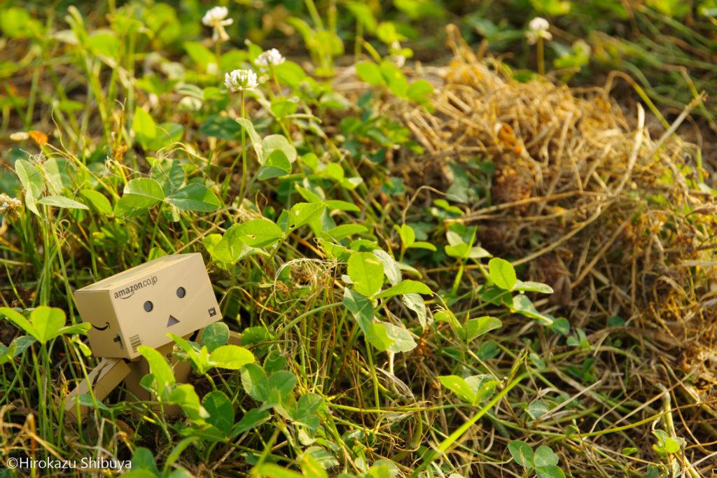 雑草とダンボー(花火大会の待ち時間にて)