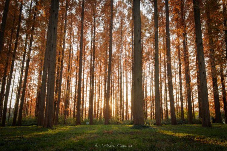 広角レンズ(31mm)で撮影した場合の遠近感