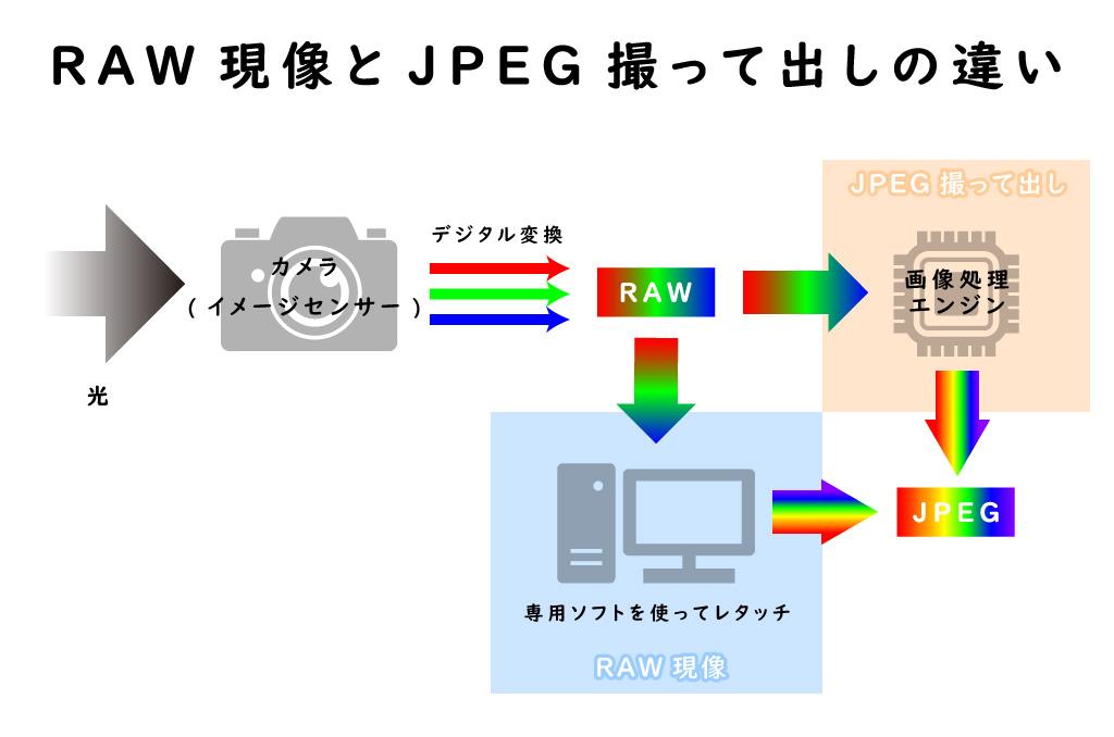 RAW現像とJPEG撮って出しのメカニズム