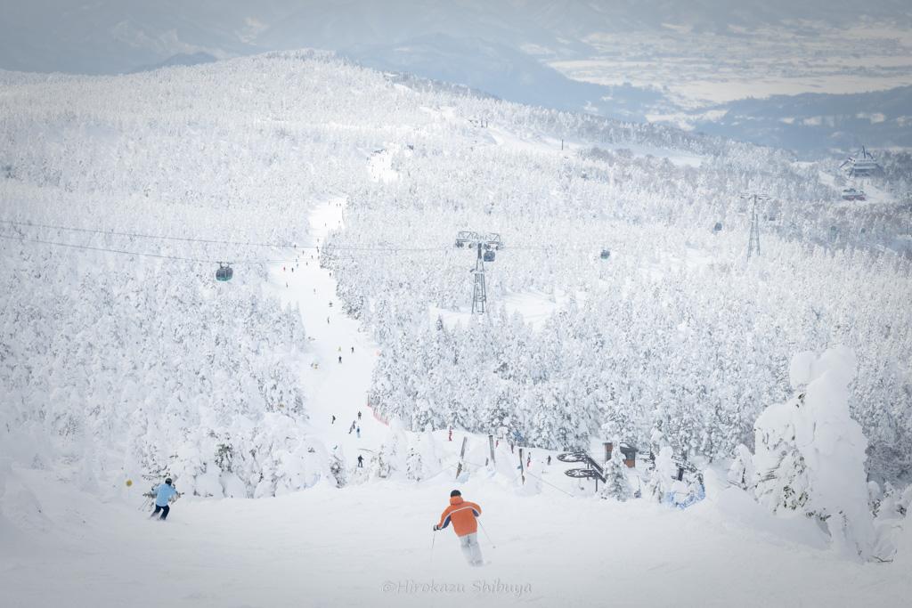 冬(12月、1月、2月)の写真撮影におすすめ被写体~雪景色~